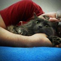 Без кота и жизнь не та.... :: Гриша  6х9 или 9х12