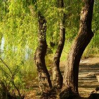 На реке :: Евгений Р