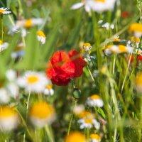 цветы :: Тамара Гераськова