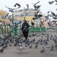 Стая голубей :: Апёнова Нина