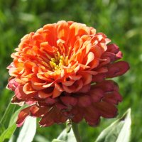 Цветок сентября :: prokyl