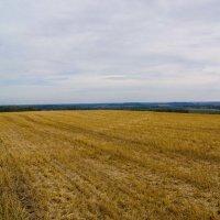Осенне поле у деревни Ковриги :: Валерий Симонов