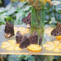 бабочки :: EDO Бабурин