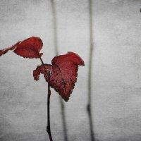 Осень :: Ирина Елагина