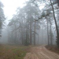 Осенним утром :: Валерий Толмачев