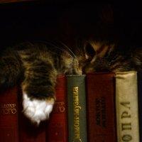 Кошка и книги :: Мария Родионова