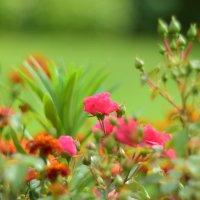 Клумба цветов :: Иван Птушкин