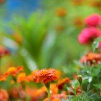 Цветы :: Иван Птушкин
