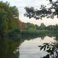 Вечер у пруда... :: Тамара (st.tamara)