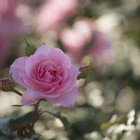 Цветы в парке :: Михаил Тищенко