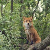 Лесной охотник :: Алексей Соминский