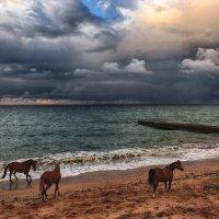 Кони и море :: Виктор Мороз