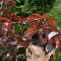 Красные листья :: Юрий