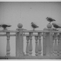 Чайки :: Михаил Цегалко
