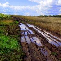 После дождичка в четверг... :: Андрей Заломленков