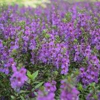 Цветы в Таборе. :: Лилия Дмитриева