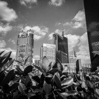 Шанхай :: Sergey Polovnikov