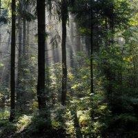 Утро в лесу.... :: Юрий Цыплятников