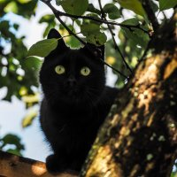 Тише мыши - кот на крыше ))) :: Андрей Зайцев