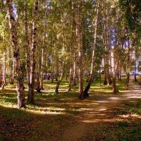 В берёзовой роще открывают детскую площадку. :: Мила Бовкун