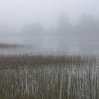 Туман :: Юрий Кольцов