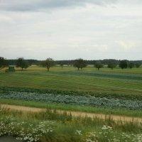 Урожай :: Алёна Савина