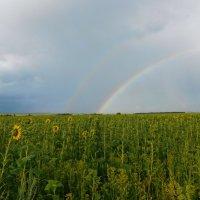 встречаем радугу :: Ольга Алеева