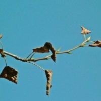 1. Увядание? :: Фотогруппа Весна.