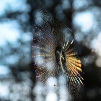 Солнце в паутине :: Валерий Чернов