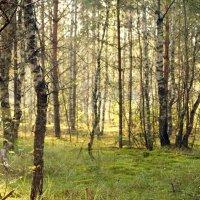 утренний лес :: Кристина Щукина