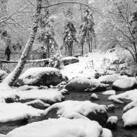 Алтай - после снегопада :: Сергей Добрыднев