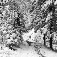 Снежная тропа :: Сергей Добрыднев