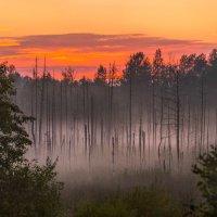 Лес на болоте :: Фёдор. Лашков