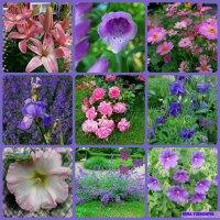Цветочный коллаж в розово-сиреневом :: Nina Yudicheva