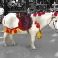А пони - тоже кони :: Elena