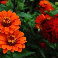 Осенние краски. :: Ангелина Божинова