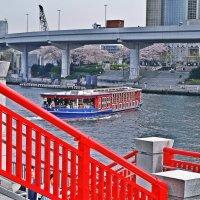 Токио река Сумида :: Swetlana V