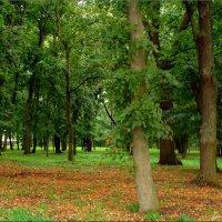В парк крадётся осень... :: °•●Елена●•° Аникина♀