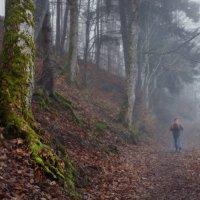 туманный лес :: Elena Wymann