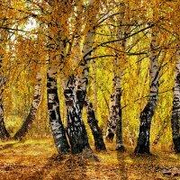 Осенний этюд у деревни Сивцево :: Валерий Толмачев