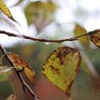 Осень. Дождь. Листья. :: Татьяна Петрова