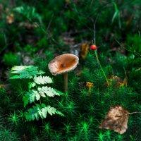 Лесной натюрморт :: Андрей Куприянов