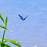 Между небом и водой :: Владимир Шамота