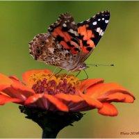 Сентябрьский нектар :: Виктор Марченко