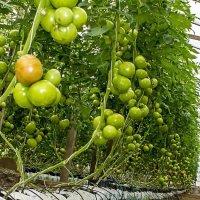 Урожай :: Александр Посошенко