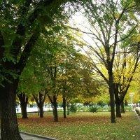 Осень в Ростове-на-Дону :: татьяна