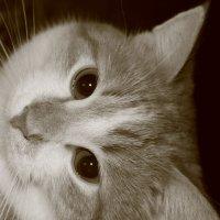 Кот :: Евгения