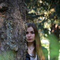 forest :: Юлия Савицкая