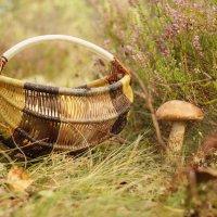 Дары леса :: андрей иванов