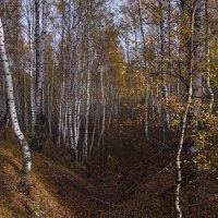 Прошлая осень :: Владимир Макаров